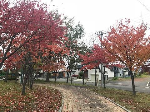 名寄公園の紅葉